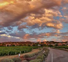 Sunset at Penfolds Magill Estate by Tim Eckert
