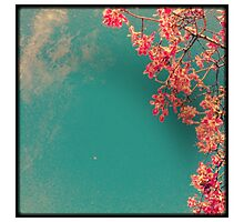 Falling Petal Photographic Print