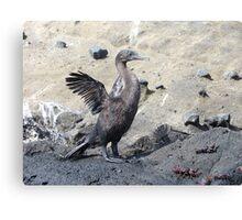 Flightless cormorant. Canvas Print