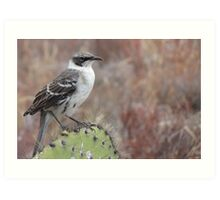 Mocking bird. Art Print