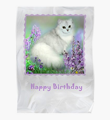 Mistletoe The Silver Shaded Chinchilla Persian Cat Birthday Card Poster