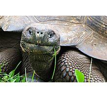Giant tortoise. Photographic Print