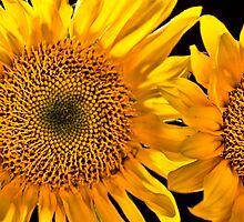 Sunny Delight by Don Schwartz