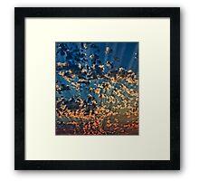 Splendid Sunset Framed Print