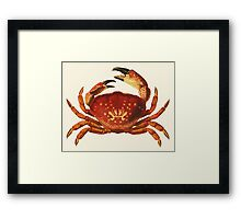 Crab illustration Framed Print