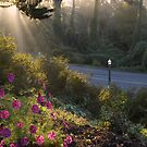 Fall Sunrise at Golden Gate Park by JagiShahani