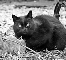 """""""Head-Bent"""" Pussy Rue (hidden behind a stone !), And I in birds tuned! but not in the same place for I  6 (t) by Olao-Olavia / Okaio Créations  by fz 1000 2014 by Okaio - caillaud olivier"""