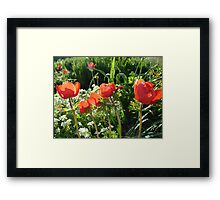 summer red garden flowers Framed Print