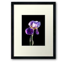 blue iris flower photo art Framed Print