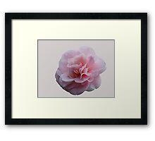 pink camellia flower Framed Print