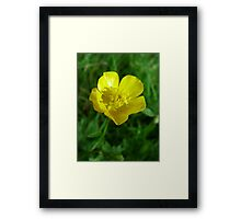 wild yellow flower, buttercup Framed Print