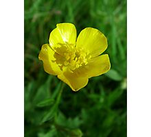 wild yellow flower, buttercup Photographic Print