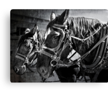 Working Horses Canvas Print