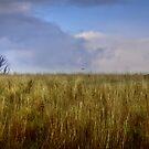 Peaceful Field by Ryan Carter