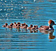 Merganser Family by Larry Trupp
