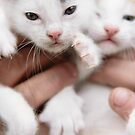 Kittens by Ryan Carter