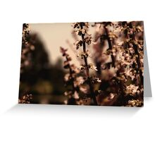 dreaming blossoms Greeting Card