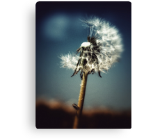 dandelion moon Canvas Print
