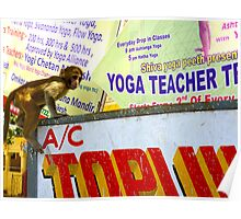 Yoga teacher in India-he's a monkey! No.2 Poster