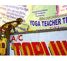 Yoga teacher in India-he's a monkey! No.2 Photographic Print