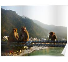 More monkeys in India... Poster