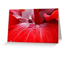 Droplet On Red Hibiscus Greeting Card