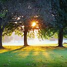 Sunny Morning in the Park by Phill Sacre