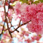 Cherry Blossom by kiya69
