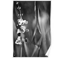 Busy Bee's and Flowers Black and White Photograph Poster