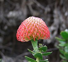 Pincushion by croust
