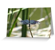 Blue Wing Greeting Card