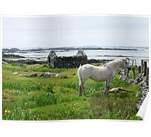 Irish West Coast Rural Scene Poster