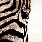 not so plain, Zebra by caradione