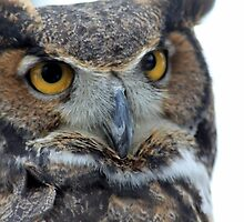 Owl be seeing you by Chris Coates