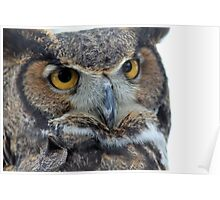 Owl be seeing you Poster