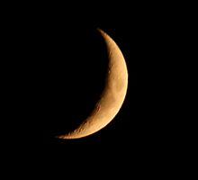 The Moon by Julie Anne Hughes