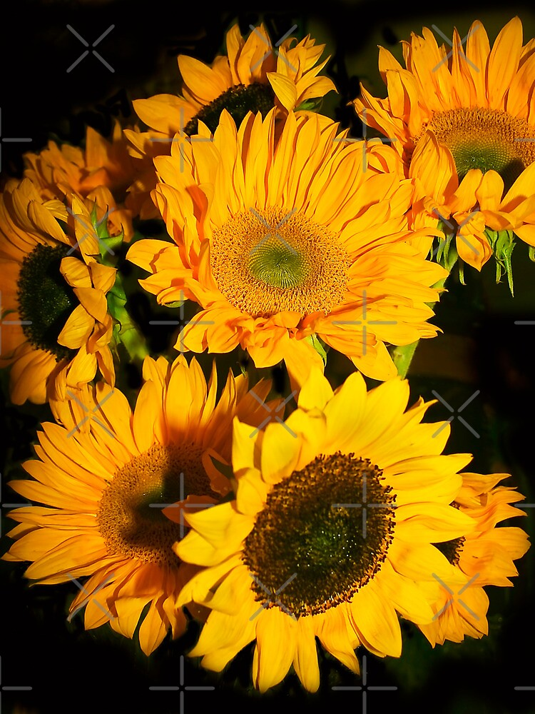 A Profusion of Sunflowers  by Heather Friedman