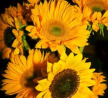 A Profusion of Sunflowers  by heatherfriedman