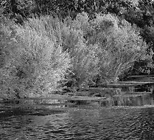 Willow and Water by homendn