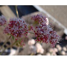 California wild flower 7 Photographic Print