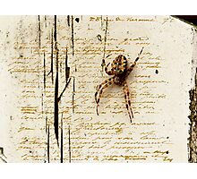 Spider Letter  Photographic Print