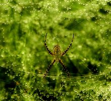 Arachne, the Garden Spider by Robin Simmons
