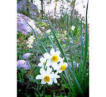 spring collection Photographic Print