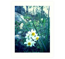 spring collection Art Print