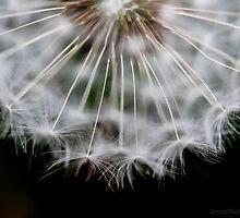make a wish by JorunnSjofn Gudlaugsdottir