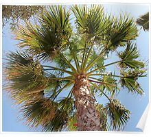 Palm Tree and Sky Poster