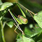 Grasshopper by lynn carter