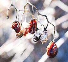 Berries by mhowe11