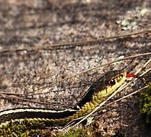 Forked Tongue by Debbie Oppermann
