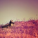 Enjoy the Silence by Christopher Burton